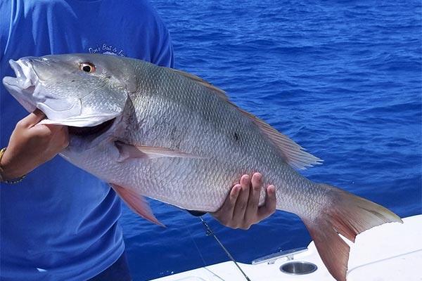 grouper fishing 01