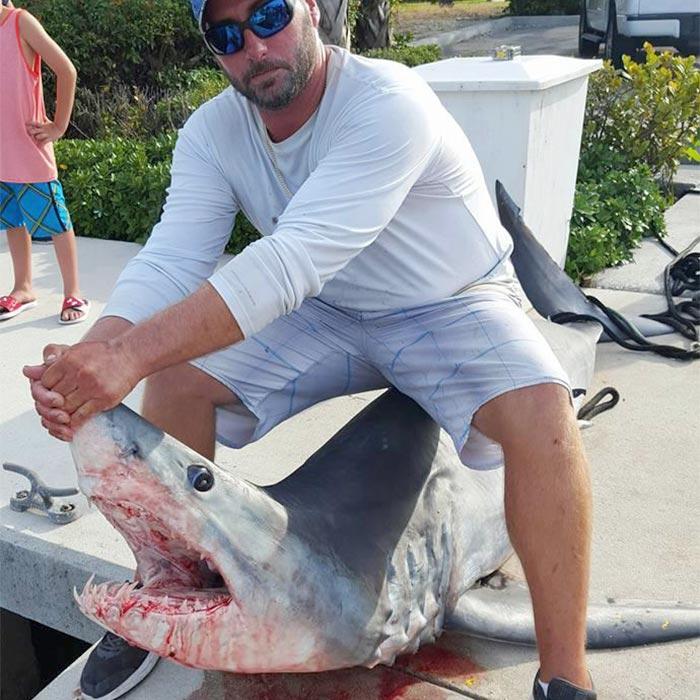 sharks image 01
